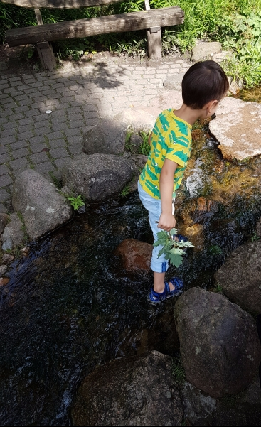 Wasserratte