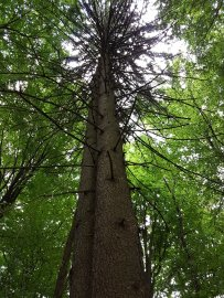 Riiiieeeesige Bäume