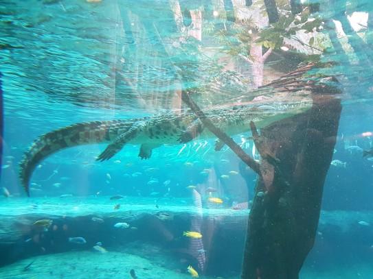 Gemütliches Krokodil