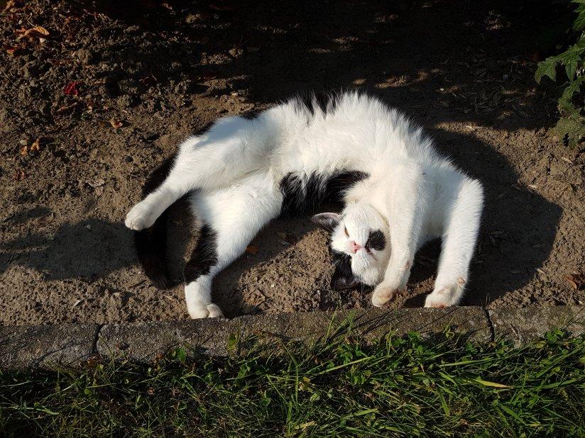 Tiefenentspanntes Katzenjoga
