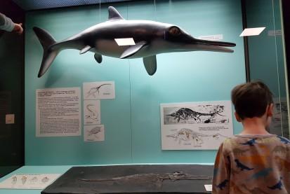 Ichthyosaurier