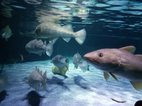 Fische im Sealife